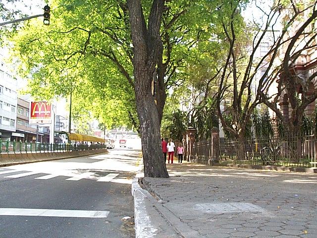 Árvore POA 02